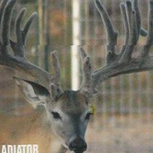 Big Rack Ranch Whitetail AI Sires - Gladiator