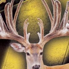 Big Rack Ranch Whitetail AI Sires - Gladiator II