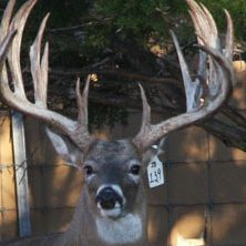 Big Rack Ranch Whitetail AI Sires - Brazos