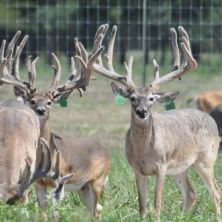 BIg Rack Ranch - 2019 Stocker Bucks - Taking Deposits Now